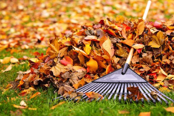 Brush and Leaf Clean-up by Southold DOT
