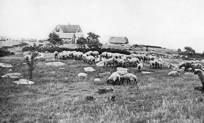 Museum-Sheep-WestEnd-Farm-660x398
