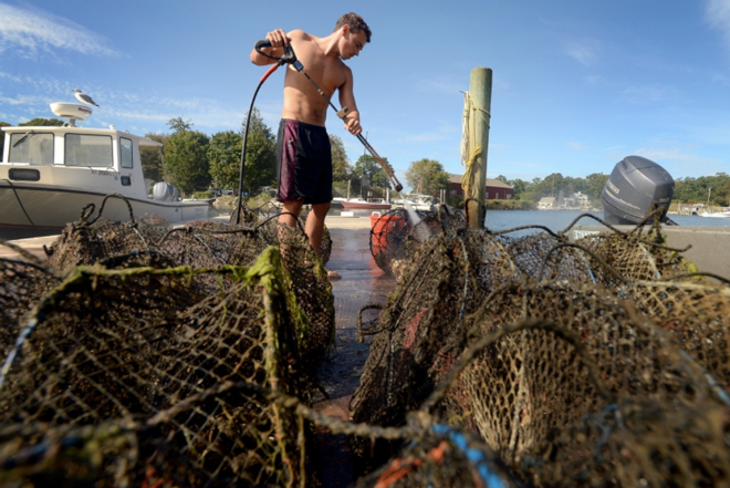 Walker Lourie, an employee at the Fishers Island Oyster Farm, power washes nets of oysters before they are packed and shipped at the oyster farm on Fishers Island Tuesday, Sept. 22, 2015. Lourie is from Middlebury, Vt., and is learning the business and plans to start an oyster farm of his own. (Tim Cook/The Day)