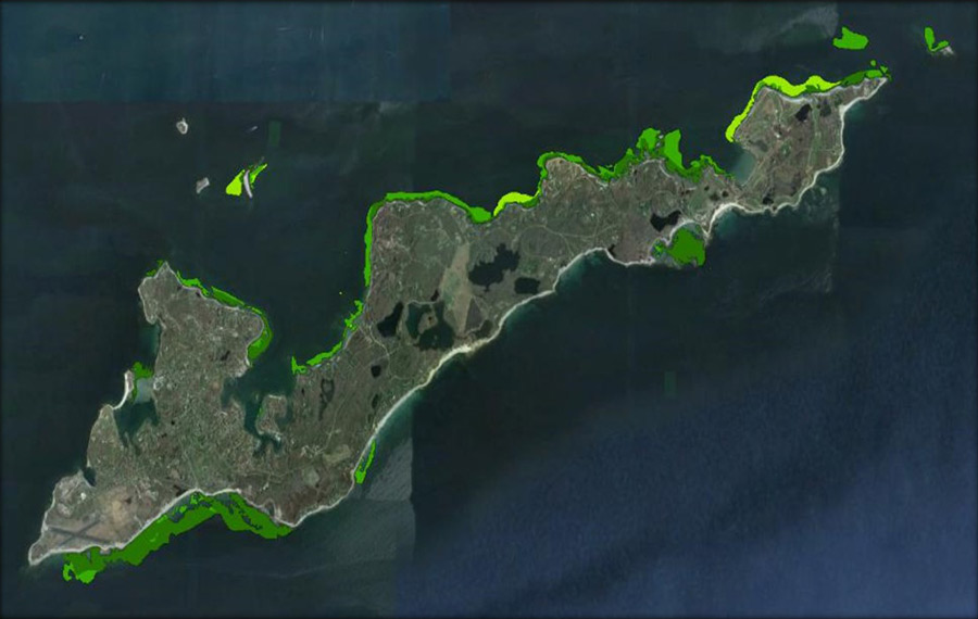 H.L. Ferguson Museum Receives Federal Grant for Fishers Island Seagrass Management
