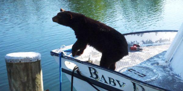 Bear Crossing & Citizen Science