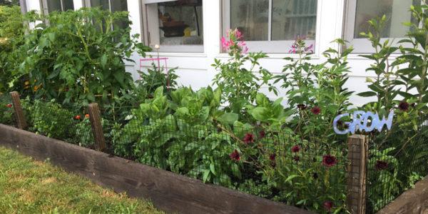 Gardening July 2018