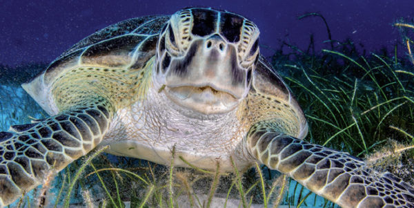 A Call for Seagrass Protection