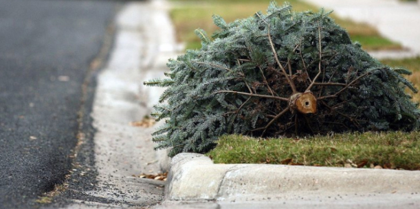 Christmas Tree Pick-up by DOT