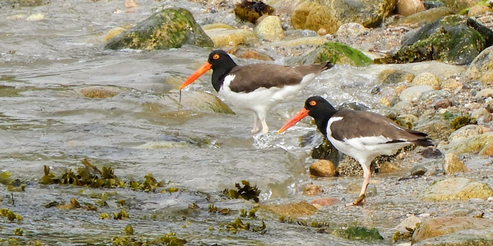 2019 Bird List for Fishers Island