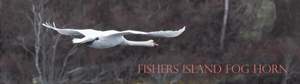 Swan-fly-Masthead-Todd-McCormick-JAN20_DSC8601-1000x281